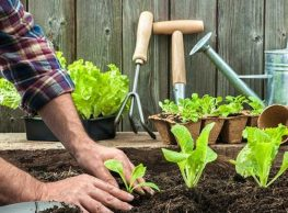The right way top plant with compost