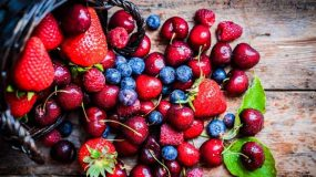 Planting, growing, and harvesting  berry Bushes
