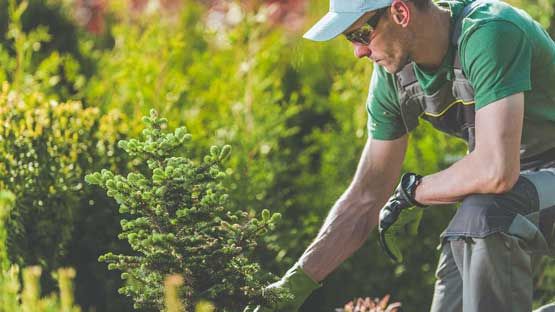 Horticulture landscaping and its principles
